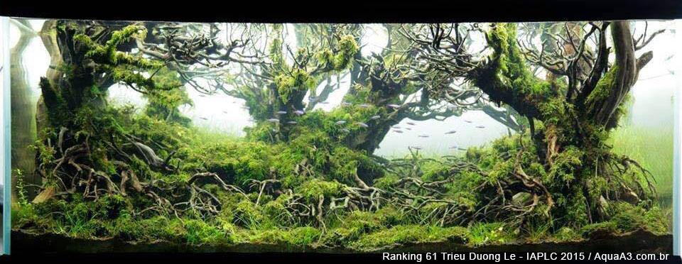 Ranking 61 Trieu Duong Le - IAPLC 2015