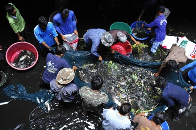 Peixes são retirados de shopping abandonado que virou aquário bizzaro