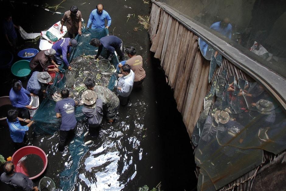 Peixes são retirados de shopping abandonado