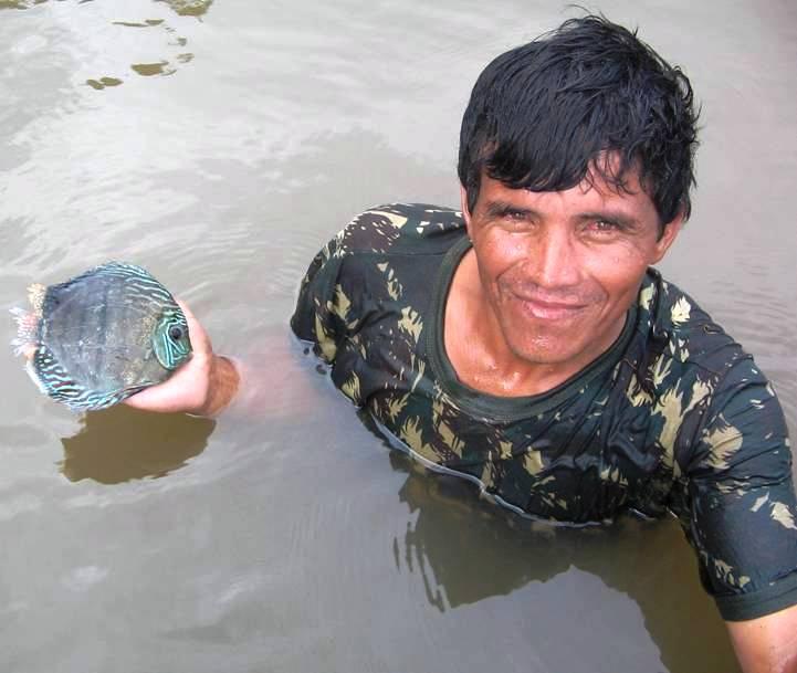 Coleta do peixe Acará-disco