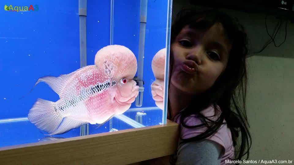 Criança com o peixe flowerhorn