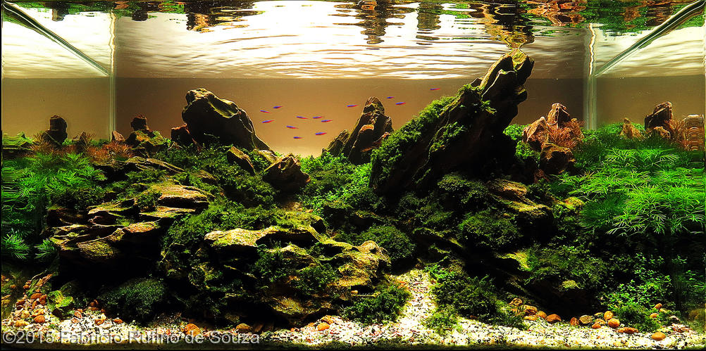 ... no AGA - International Aquascaping Contest 2015 AquaA3 Aquarismo