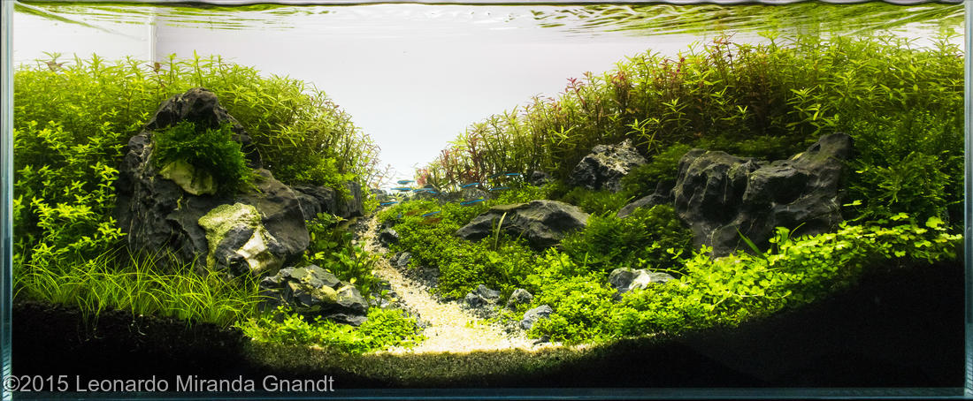 Aquário de Leonardo Miranda - AGA 2015