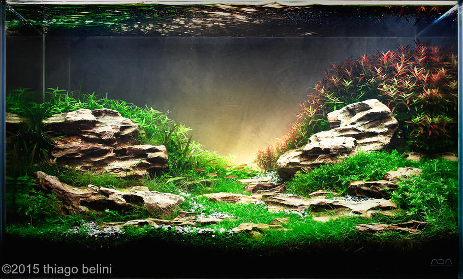 Aquário de Thiago Belini - AGA 2015
