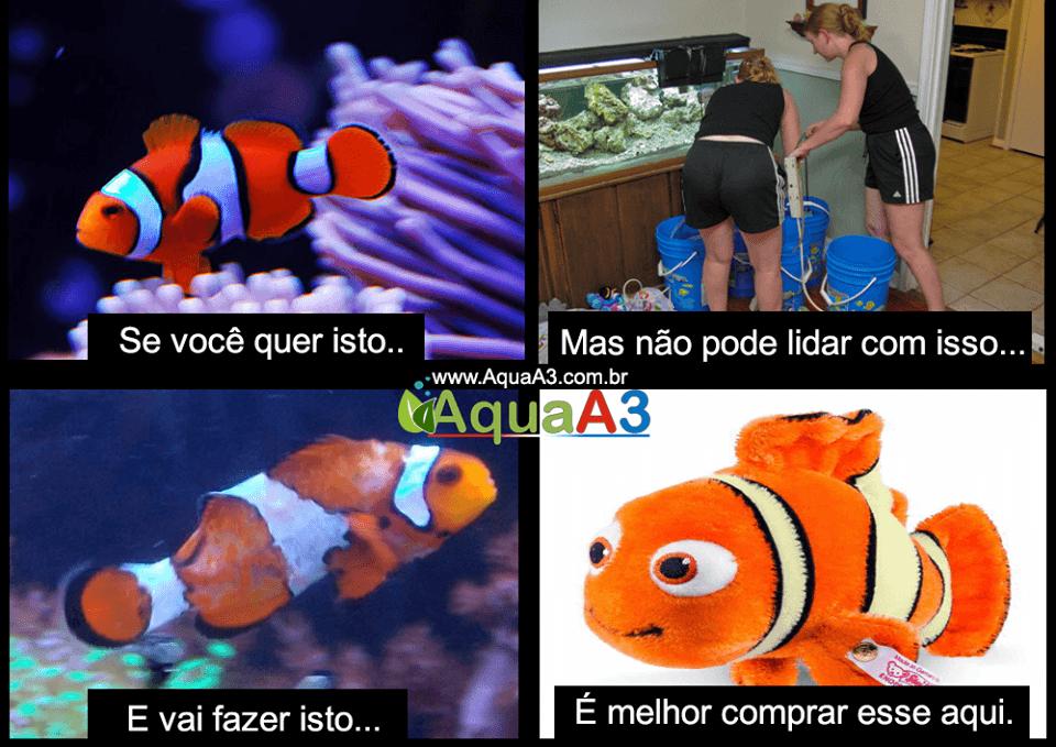 Humor peixe palhaço