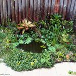Lago plantado • Os benefícios das plantas no lago ornamental