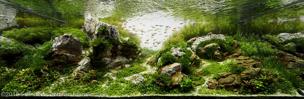 Estilo Nature Aquarium