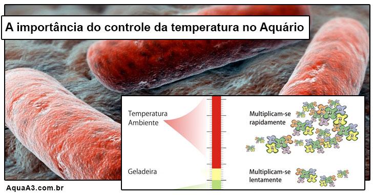 A importância do controle de temperatura no Aquário em relação as bactérias.