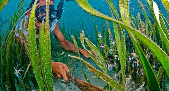 Pescador nativo coletando Banggai Cardinalfish perto de Bone Baru, Indonesia.