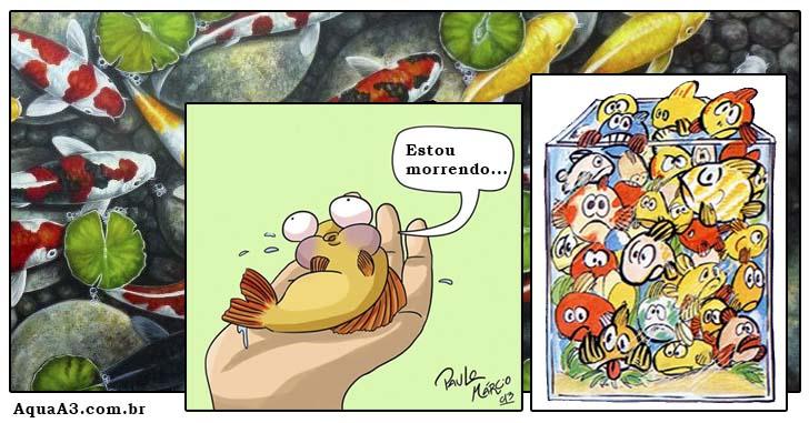 O estresse nos peixes
