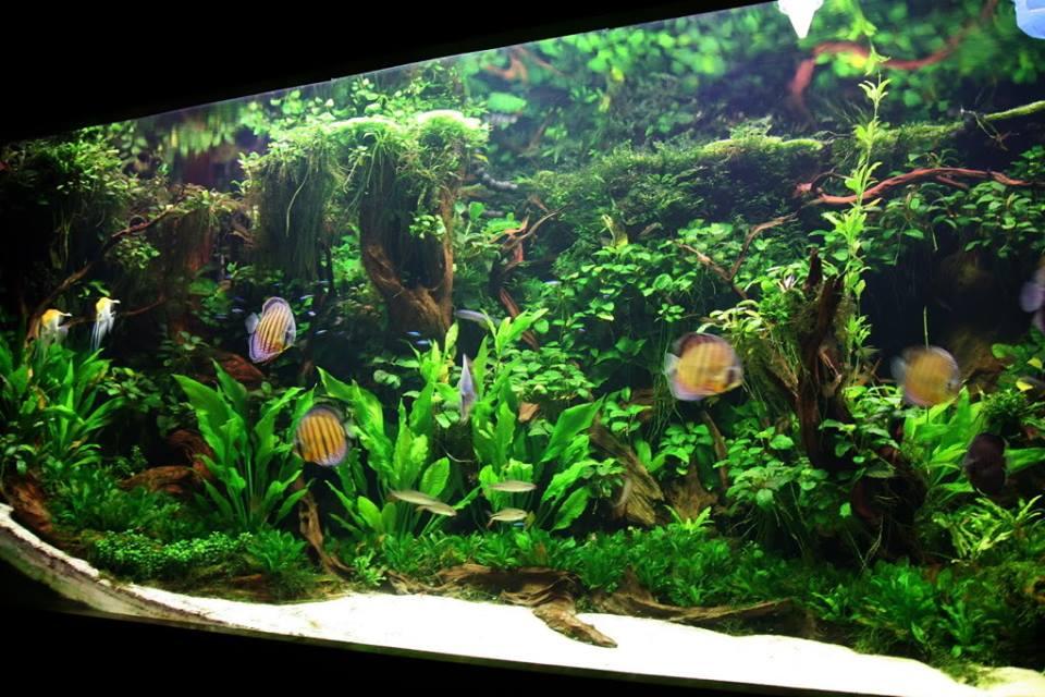 Aquapaisagismo estilo selva