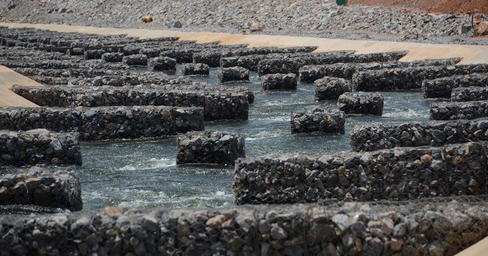 Peixes do Rio Xingu percorrem canais artificiais