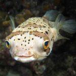 Peixes marinhos podem ficar embriagados com CO2 1 • Peixes marinhos podem ficar embriagados com CO2