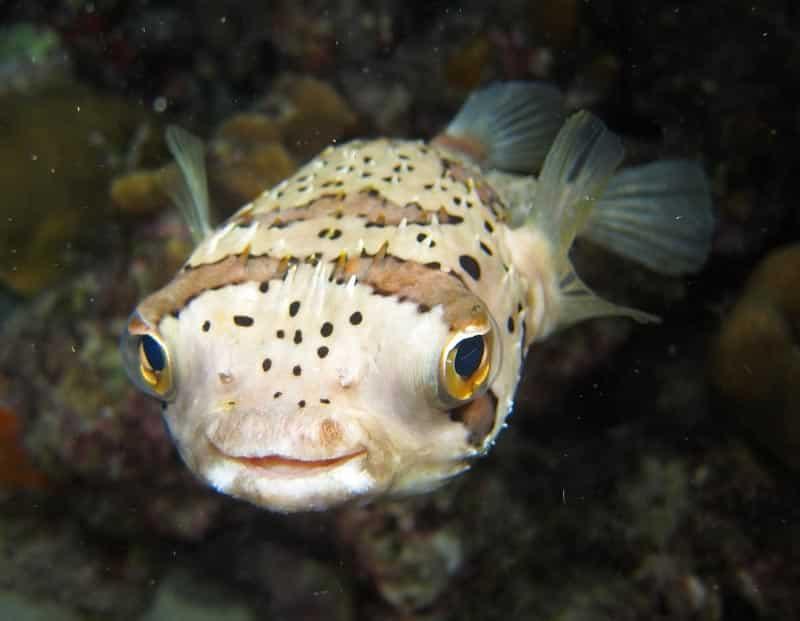 Peixes marinhos podem ficar embriagados com CO2