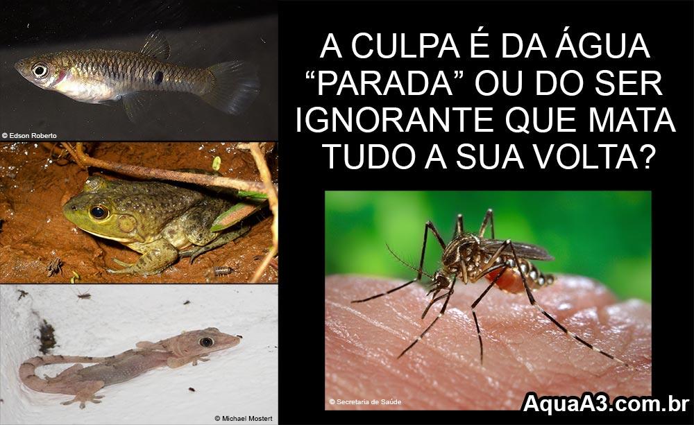 água parada e o mosquito Aedes aegypti