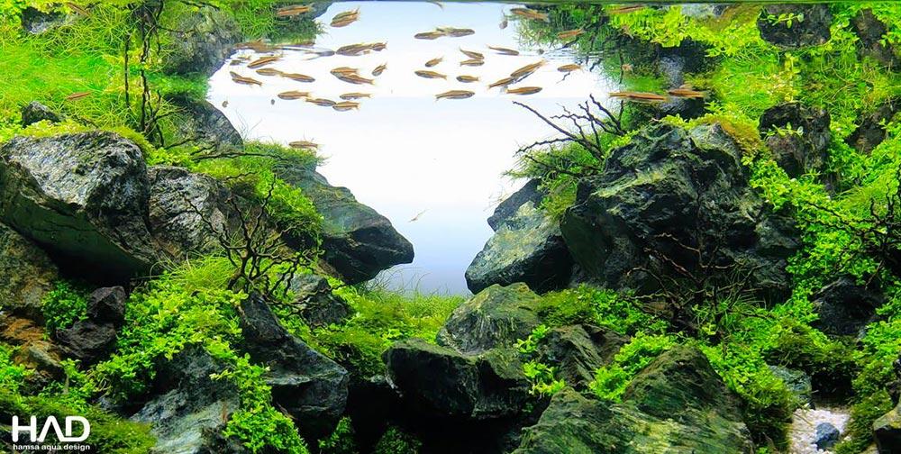 Evolução utilizando o mini Wabi kusa no aquário