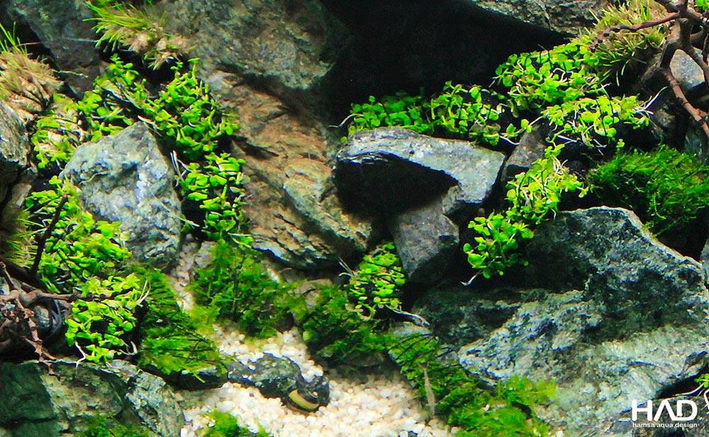 Wabi kusa dentro do aquário