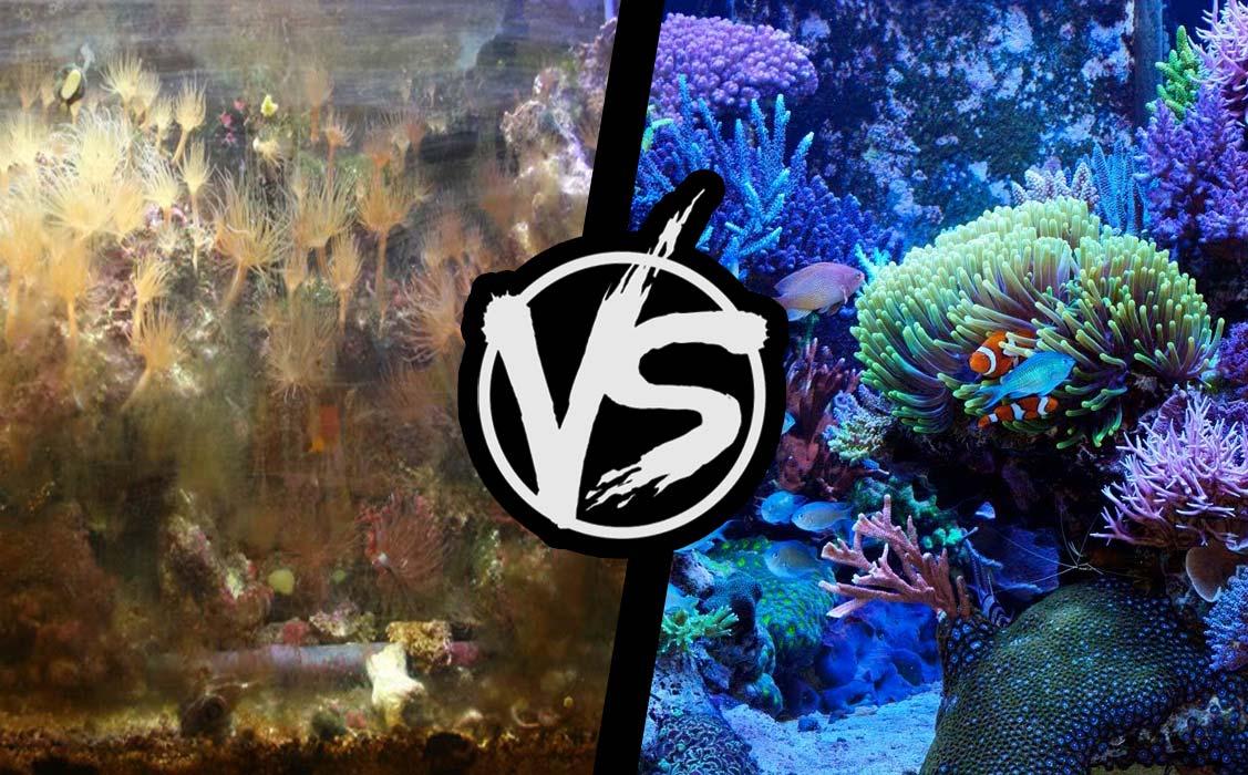 O aquarista e o torturador de • Você realmente é aquarista ou falso aquarista?