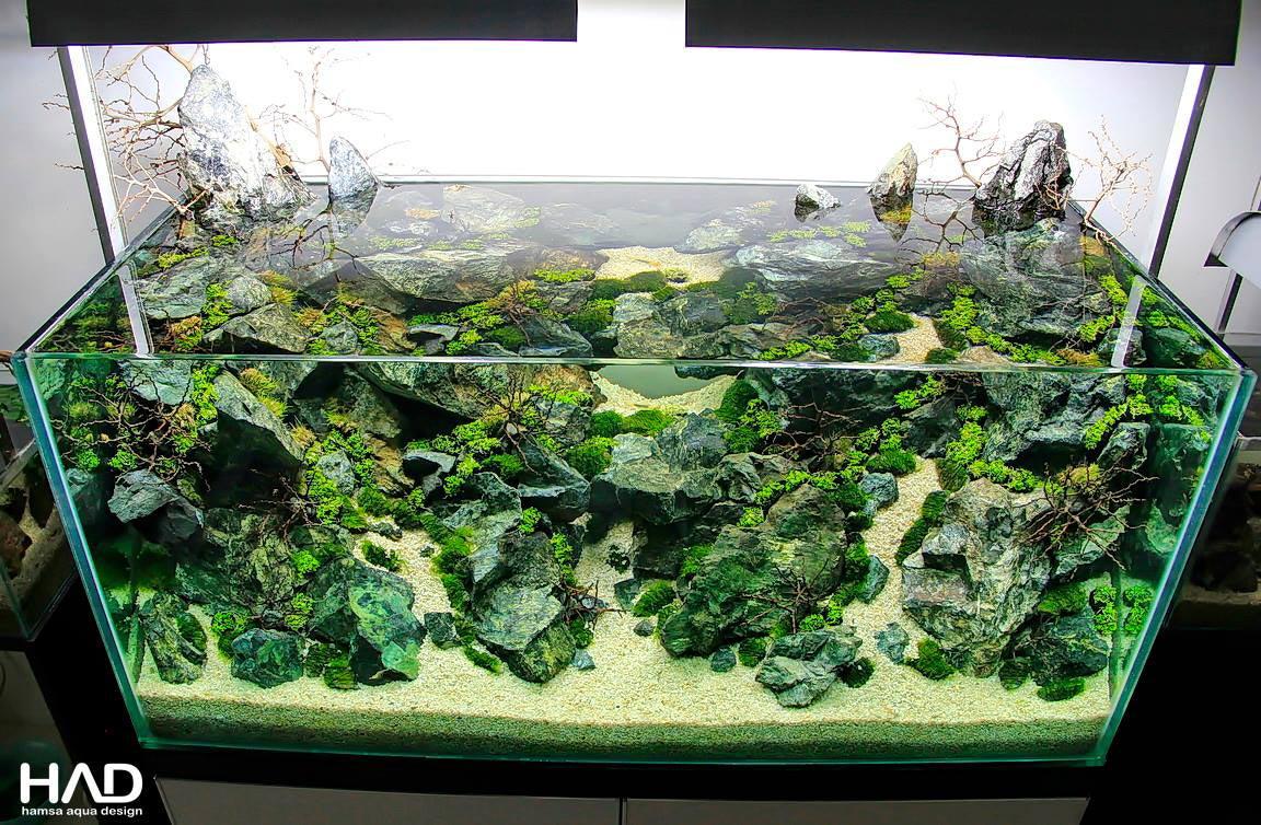 Plantando wabi-kusa no aquapaisagismo