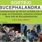 Sorteio Bucephalandras • Sorteio: Bucephalandras