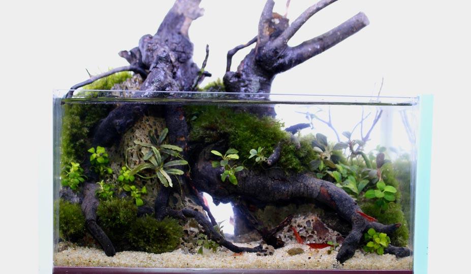 TOP 1 Satrya Concurso de aquapaisagismo em miniatura