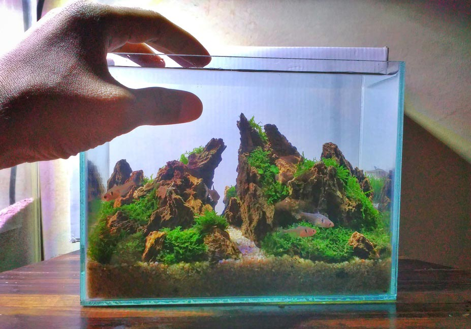 TOP 4 Riyan Wahyudi no Concurso de aquapaisagismo em miniatura