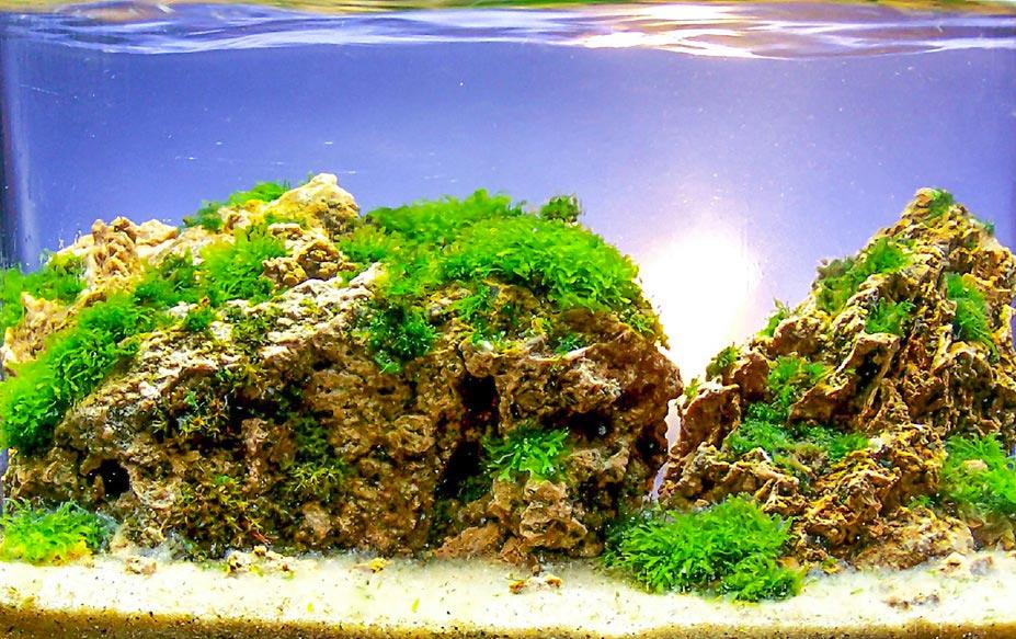 TOP 5 Frederic Fuss no Concurso de aquapaisagismo em miniatura