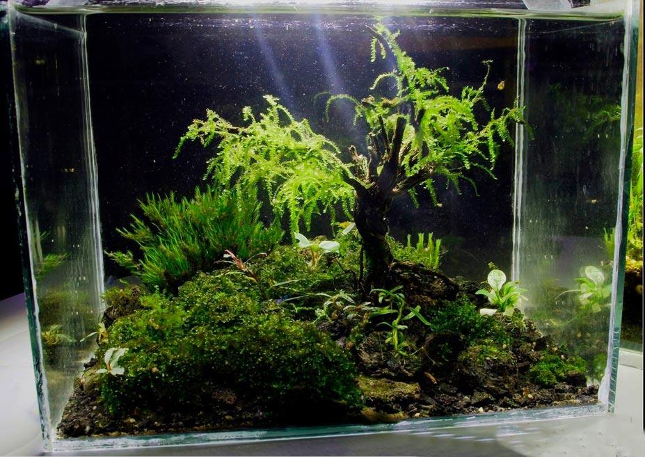 TOP 6 Maxime Moretto no Concurso de aquapaisagismo em miniatura