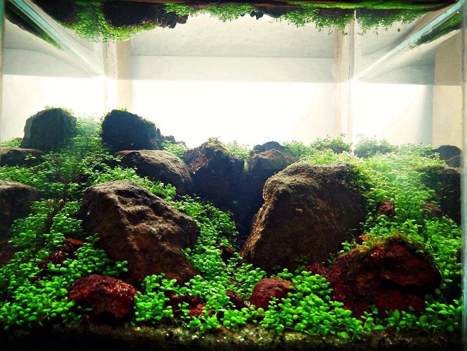 TOP 8 Aldo Santana no Concurso de aquapaisagismo em miniatura
