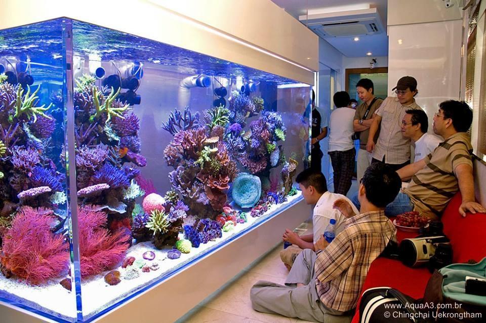 aquário marinho