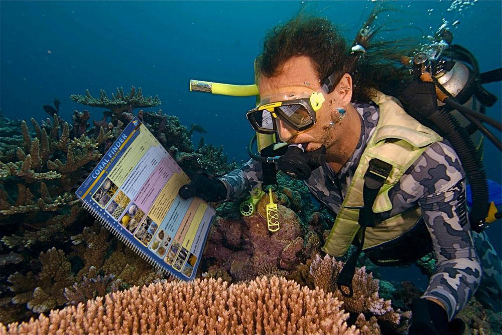 Catalogando corais