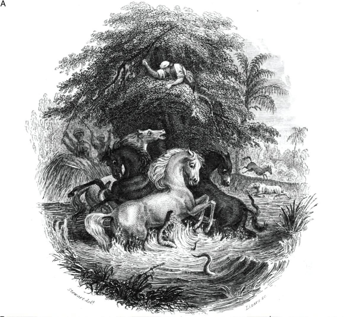Relato de Alexander von Humboldt sobre o peixe Poraquê