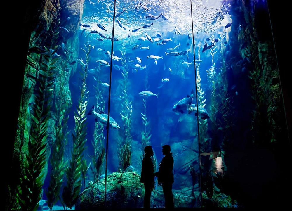 dia dos namorados no aquário
