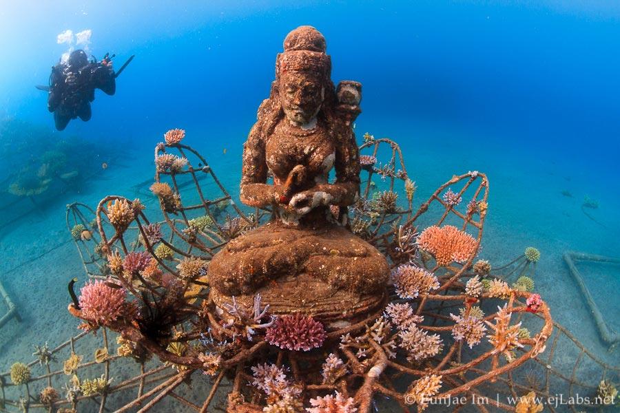 Buda com corais marinhos