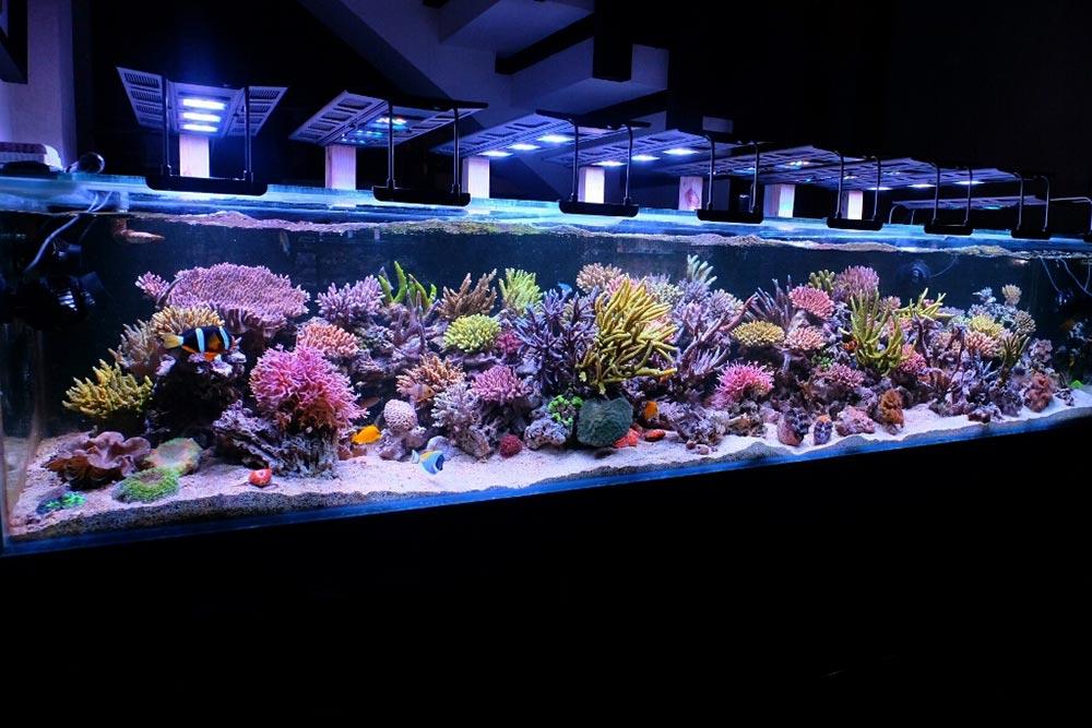 Luminária Maxspect para aquário marinho