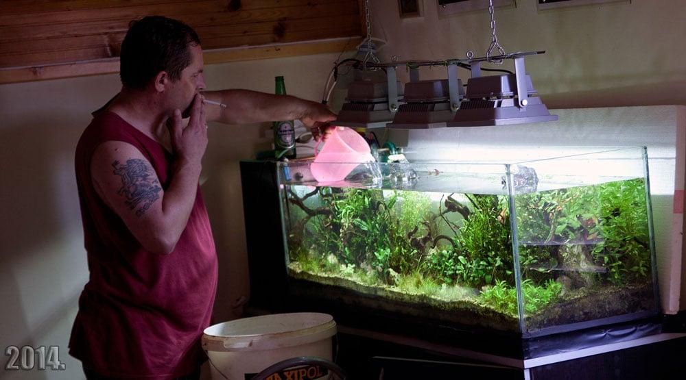 Os malefícios do cigarro para os peixes ornamentais