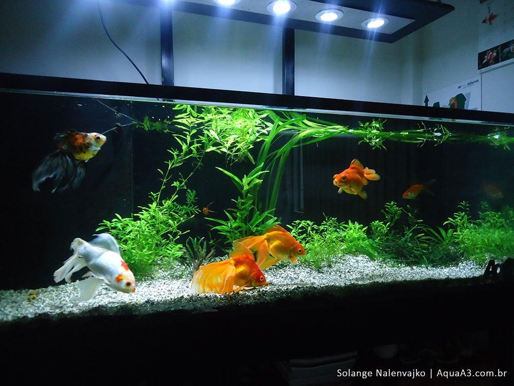 Seu-peixe-é-um-animal-ou-uma-decoração