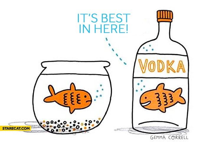 Vodka no aquário marinho