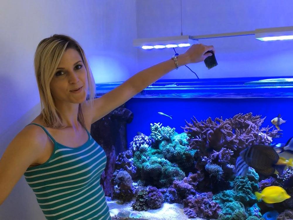 alimentando os peixes marinhos