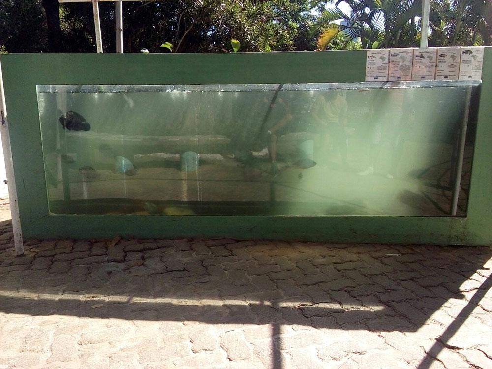 aquário de salvador pede socorro