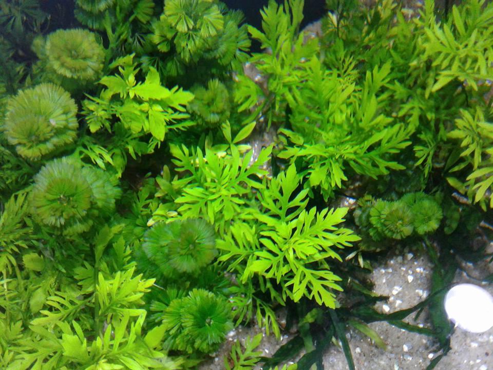 um pedacinho da natureza dentro do aquário