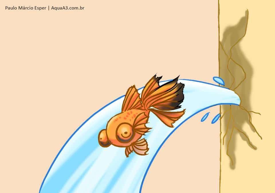 Aquário tentado ou aquário concluído