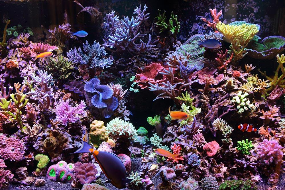 aquario marinho de corais