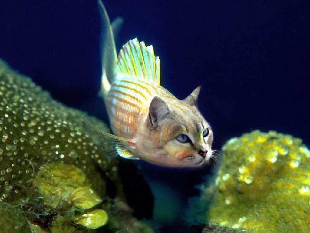 As principais lendas do aquarismo • As principais lendas do aquarismo