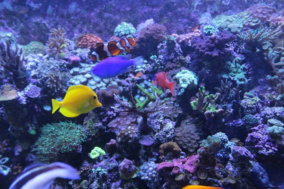 Uma paixão chamada aquarismo