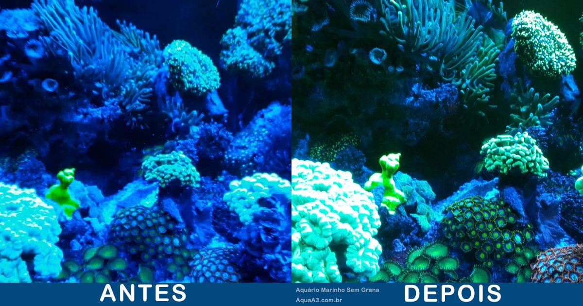 Dica de como tirar foto do aquário marinho
