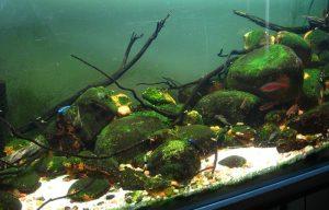 Hillstream tank