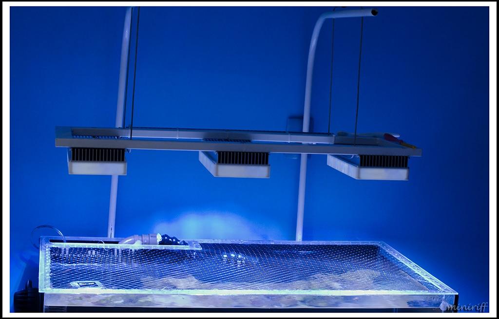 tampa de tela no aquário