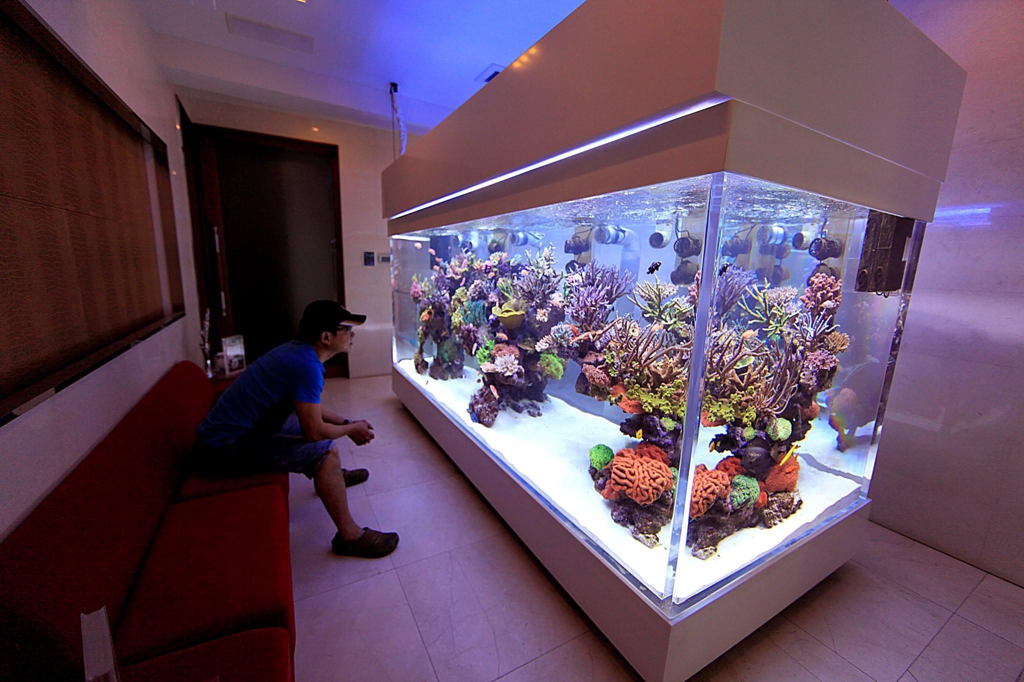 Tampa de madeira no aquário