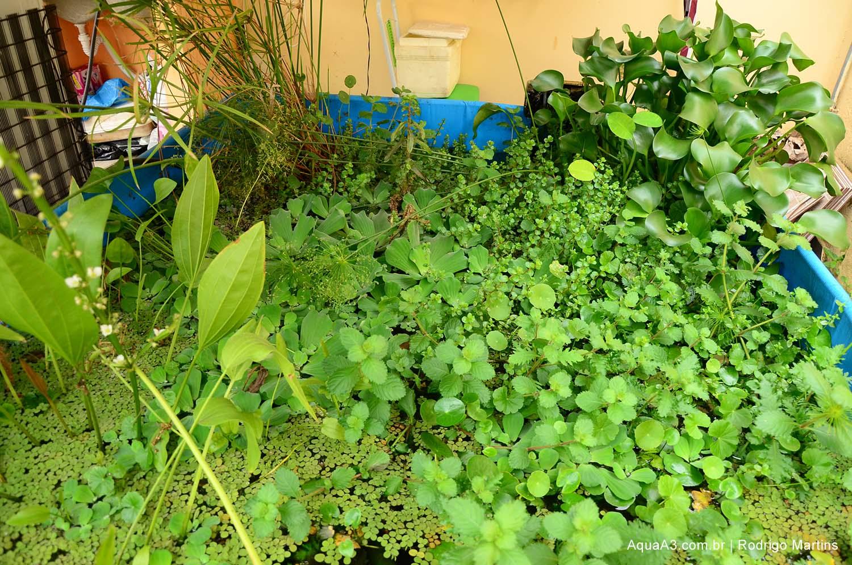 flora tanque plantado